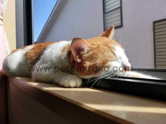 愛猫のペット生活には去勢や子猫が生まれることなど知識と教養を認識しておきましょう
