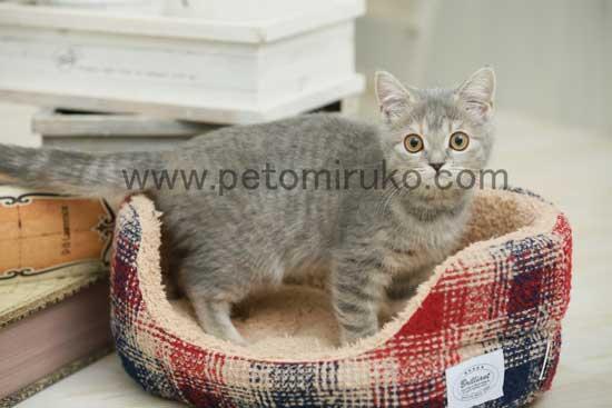 愛猫のペット用品には爪とぎや消臭グッズなどがあります