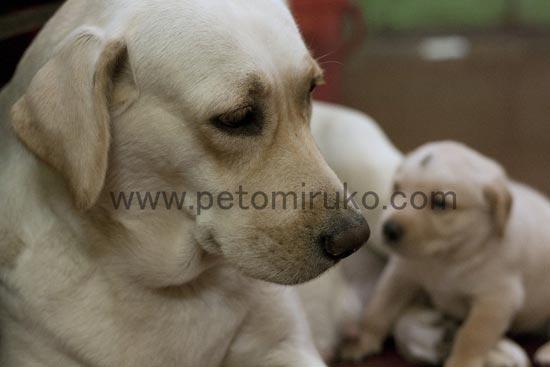 愛犬の性質や性格を理解しながら生活していきましょう