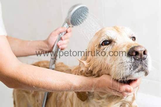 気持ちよさそうにからだをペットシャンプーで洗われている姿を見ると嬉しくなります