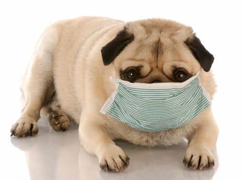 知って安心!あなたの愛犬を守るアレルギー対策とは?