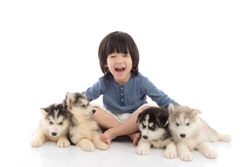 子犬と成犬の違いに気をつけながらペットグッズを購入しよう
