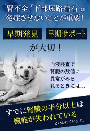 犬用サプリメント毎日腎活の効果は?安全性は?
