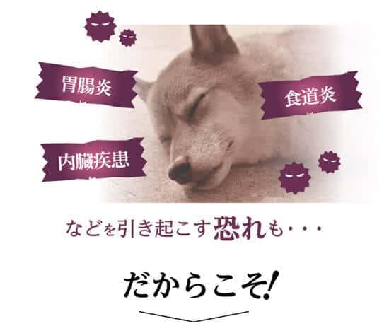 サクラペットフードなら腸内環境を整えて犬の病気を予防する